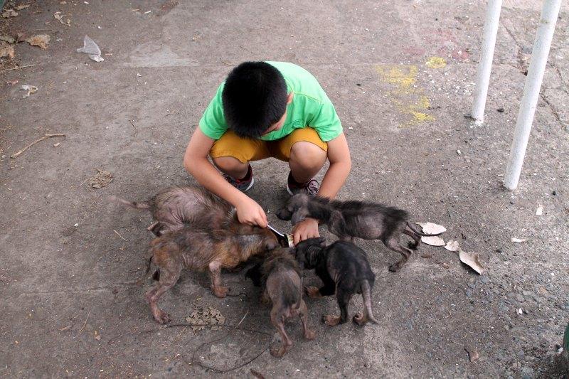 animaux sauve 5