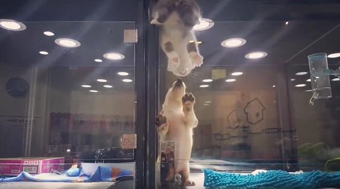 chat cellule vitrée 2