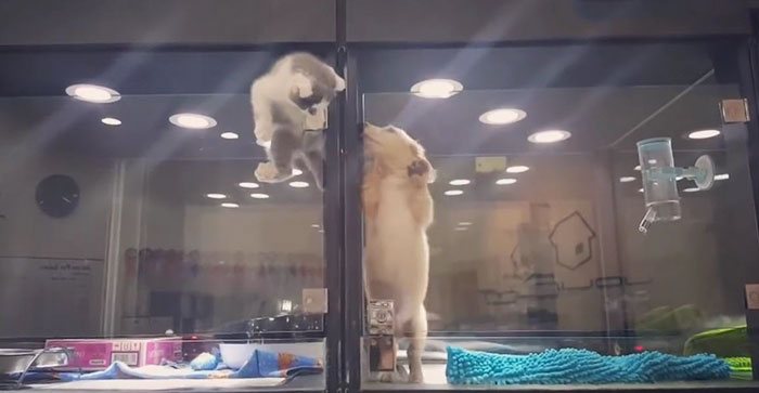 chat cellule vitrée