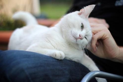 caresser votre chat peut tre tr s dangereux selon une tude r cente voyage actus. Black Bedroom Furniture Sets. Home Design Ideas